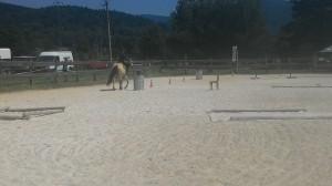 ranc_mustang_loucna_010
