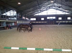 wrc_proster_horse_ranch_celanda_001