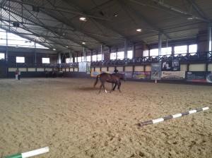 wrc_proster_horse_ranch_celanda_002
