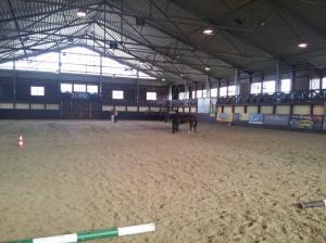 wrc_proster_horse_ranch_celanda_003