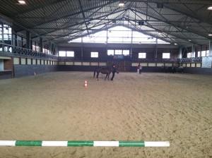 wrc_proster_horse_ranch_celanda_005