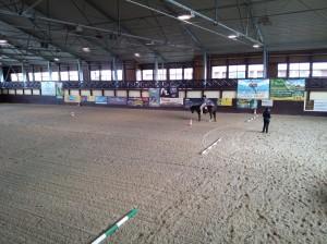 wrc_proster_horse_ranch_celanda_008