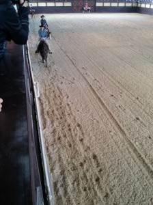 wrc_proster_horse_ranch_celanda_033