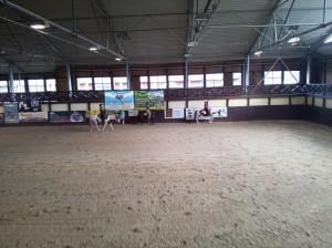 wrc_proster_horse_ranch_celanda_045